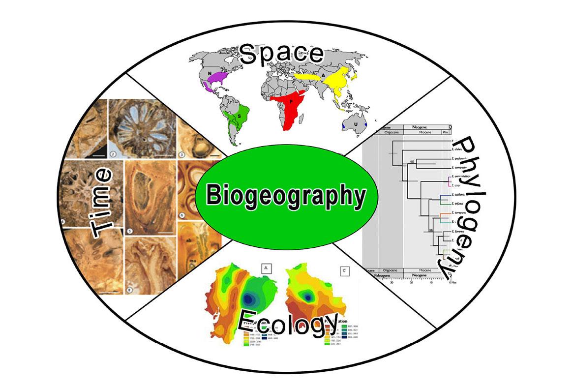 Biogeography - SIUE